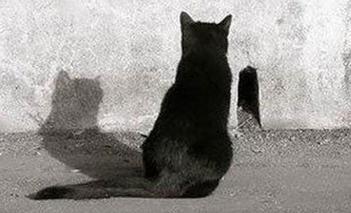 gatto-aspetta-con-pazienza-